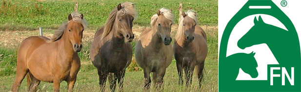 Trächtigkeit pferd